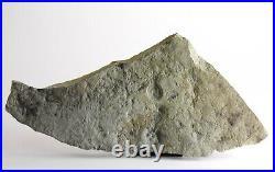 Tribrachidium and juvenile Margaritiflabellum RARE Precambrian Ediacaran fossil